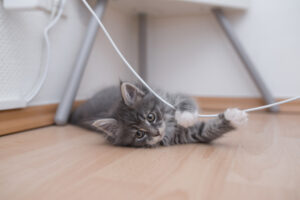 Ask an Electrician: Why Does My Cat Constantly Chew on My Electrical Cords?
